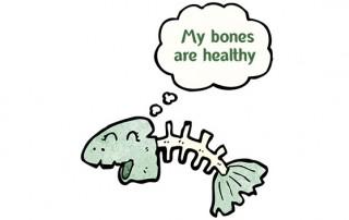fish with healthy bones